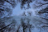 Ursi SPIEGEL-UNG-bäume