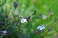 Andrea_Flugfaehige_Insekten