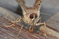 Angie_Flugfaehige_Insekten