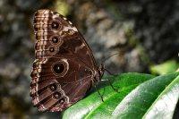Annelies_Flugfaehige_Insekten