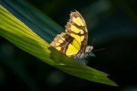 Daniela_Flugfaehige_Insekten