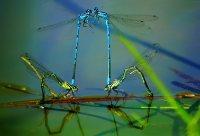 Doelf_Flugfaehige_Insekten