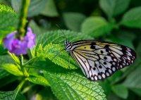 Franz_Flugfaehige_Insekten