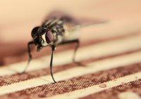 ManuS_Flugfaehige_Insekten