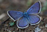 Prisca_Flugfaehige_Insekten