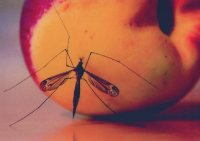 Steve_Flugfaehige_Insekten