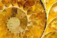 Corina geom Formen der Natur