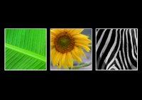 Markus_Geometrie in der Natur